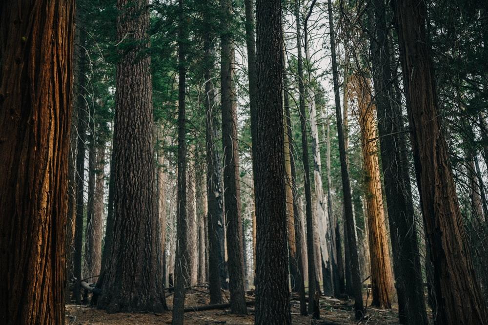 madera natural de abeto